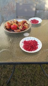 Enjoying pomegranate with none other than my baaba